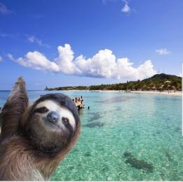 slothbeach