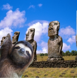 slothchile