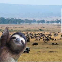 slothsafari